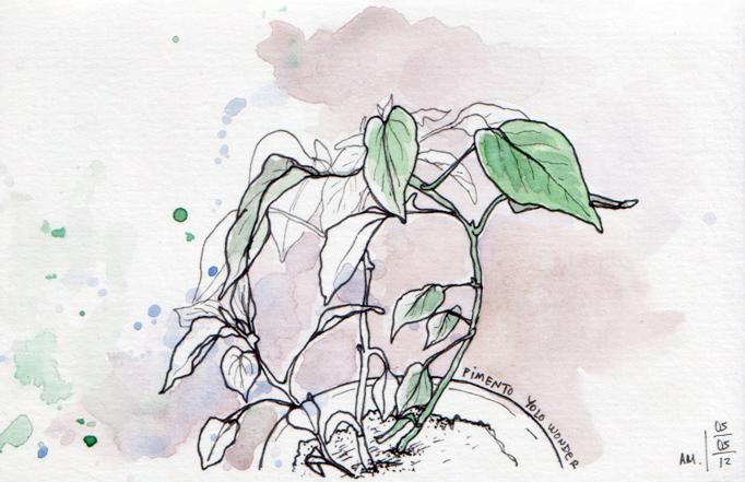 ana romao - pepper plant from balcony