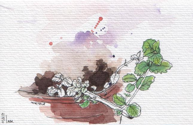 ana romao - mint plant from balcony