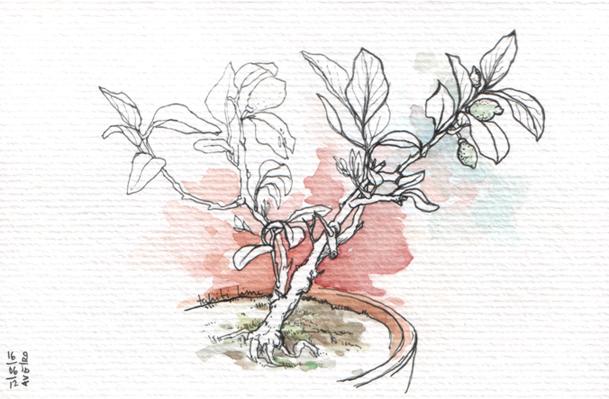 ana romao - bonsai lime tree at aveiro