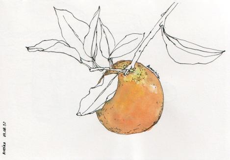 ana romao - orange tree at aveiro