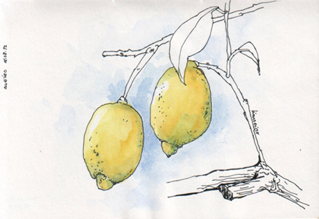 ana romao - lemon tree at aveiro