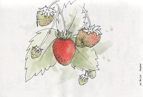 ana romao - strawberry plant at aveiro