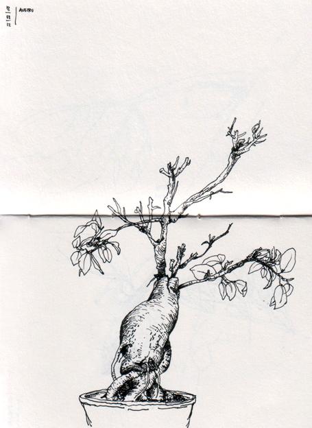 ana romao - sick ficus bonsai tree