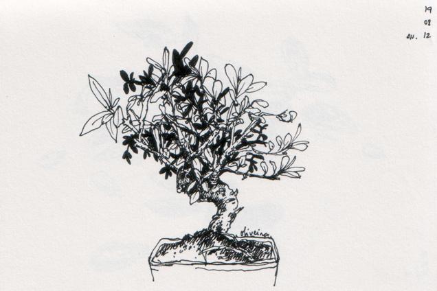 ana romao - olive bonsai tree - aveiro