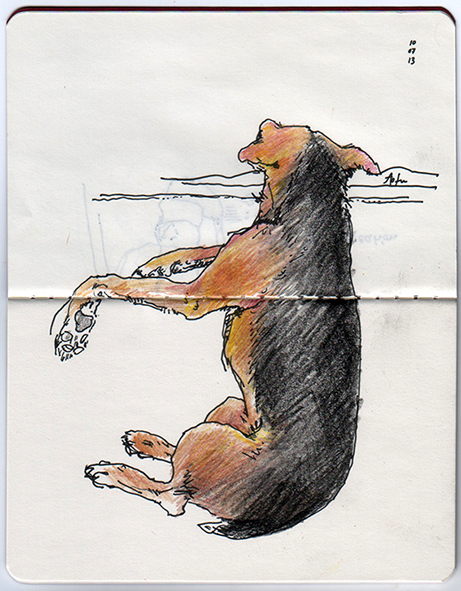 ana romao - tofu, the family dog