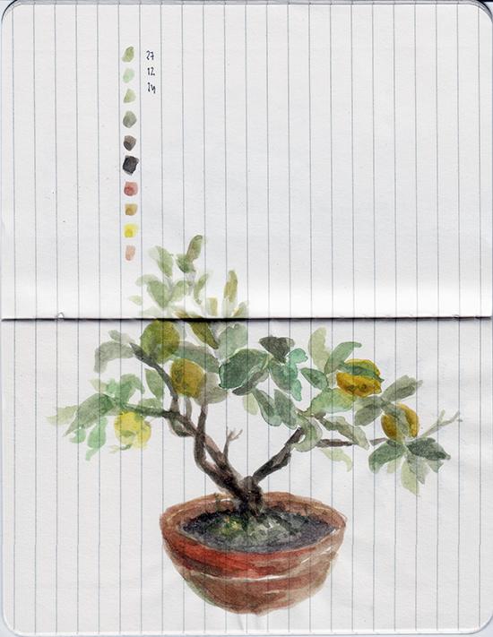 ana romao - sketch of a bonsai lemon tree