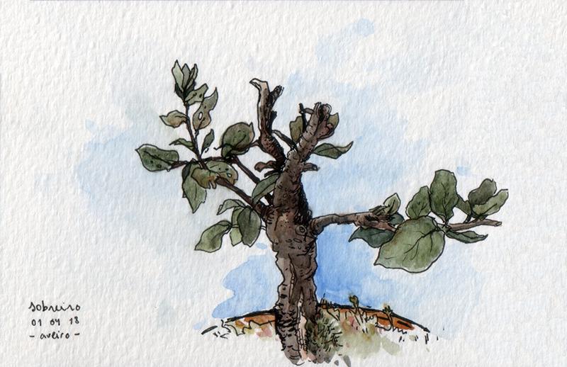 ana romao - bonsai corktree