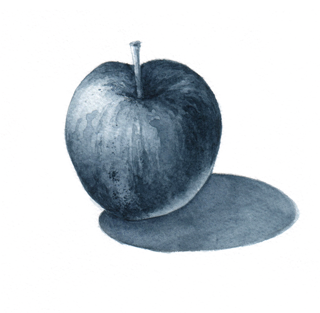Scientific illustration of an apple with watercolor - one color