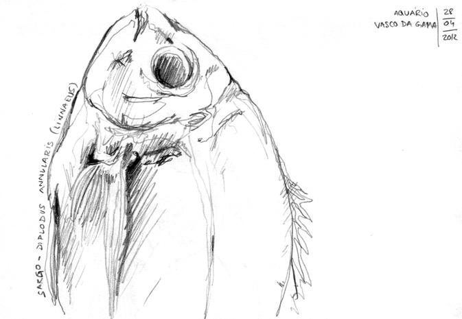 ana romao - sketch of fish from aquario vasco da gama