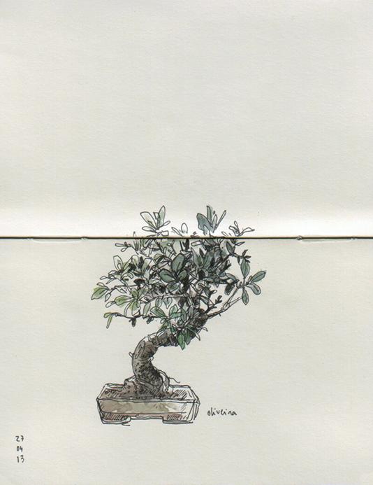 ana romao - bonsai olive tree at aveiro