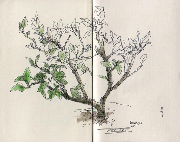 ana romao - bonsai lemon tree at aveiro