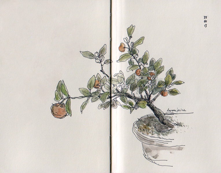 ana romao - bonsai orange tree at aveiro