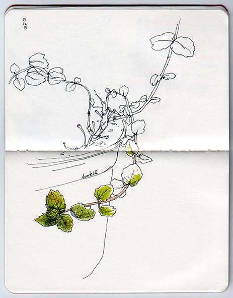 ana romao - plants from balcony - mint