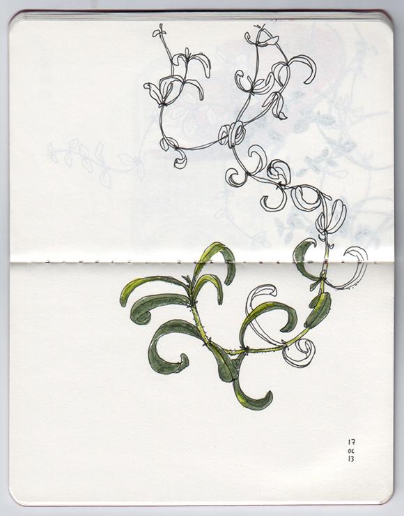 ana romao - plants from balcony - rosemary