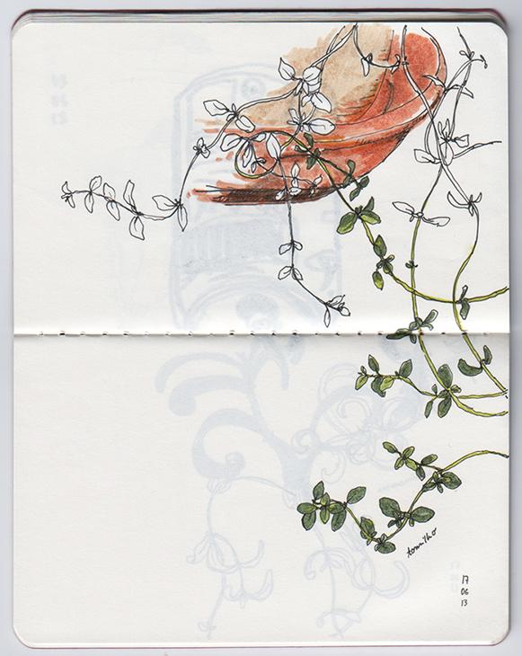 ana romao - plants from balcony - thyme