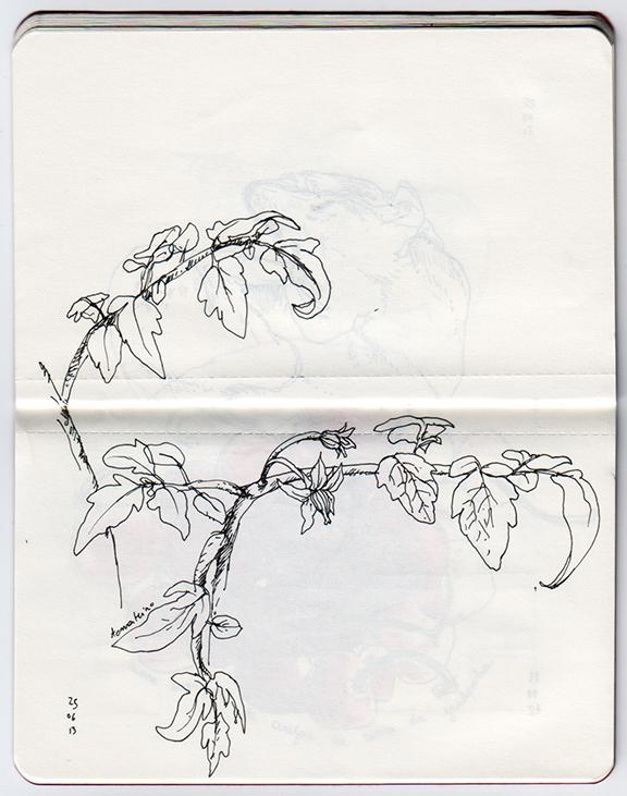 ana romao - plants from balcony - tomato plant