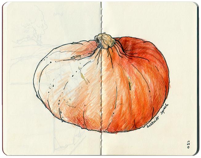 sketchbook _ Hokkaido squash