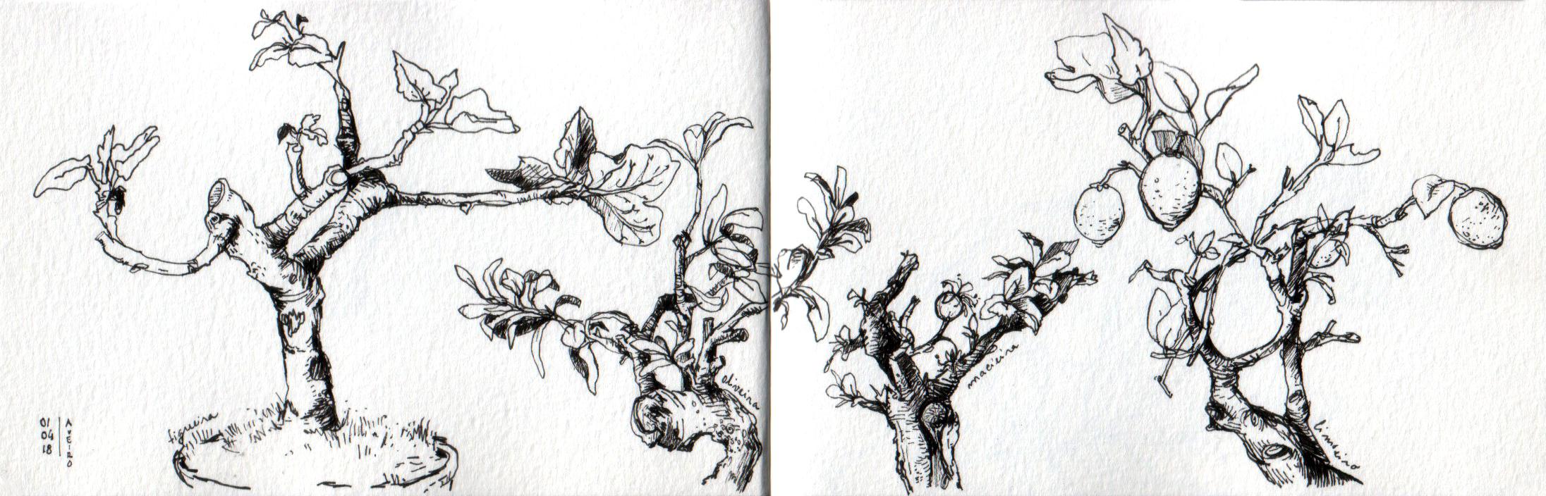 ana romao - drawing of four bonsai trees made at aveiro