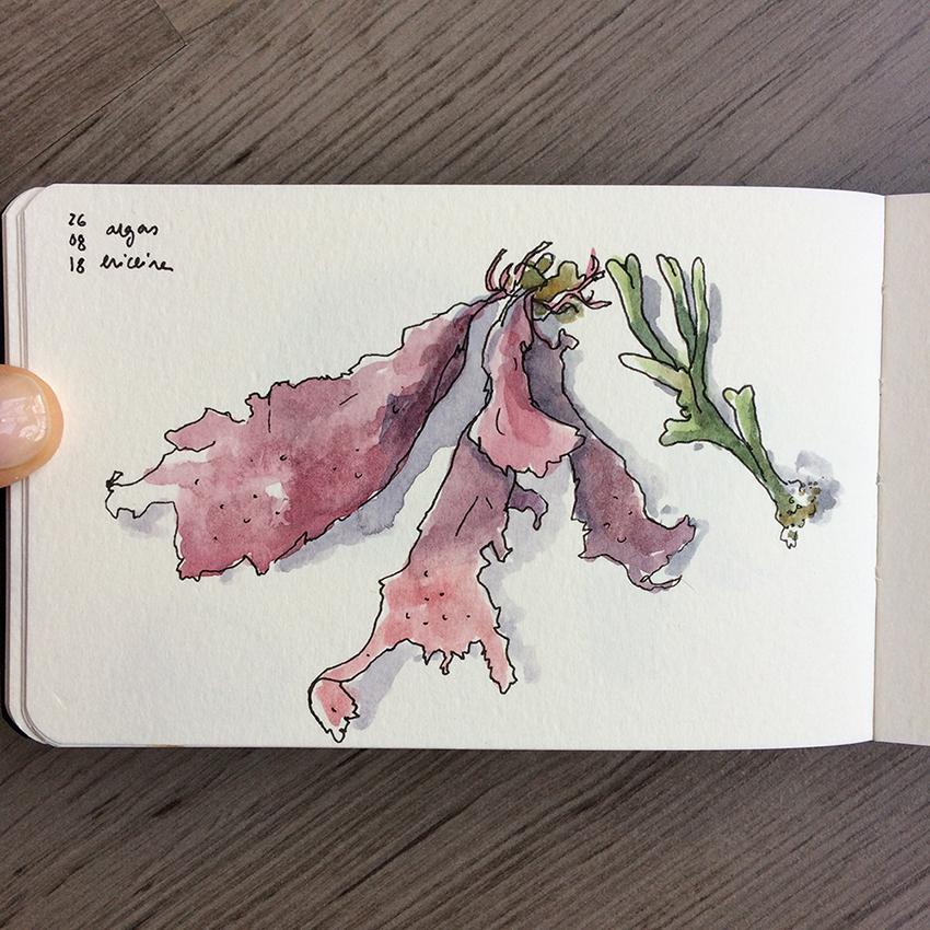 ana romao - sketch from algae at the beach
