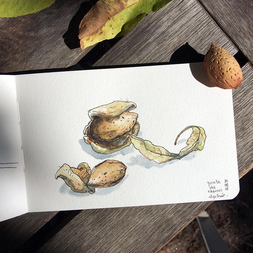 ana romao - watercolor sketch form sketchbook almonds from quinta dos ribeiros - alentejo