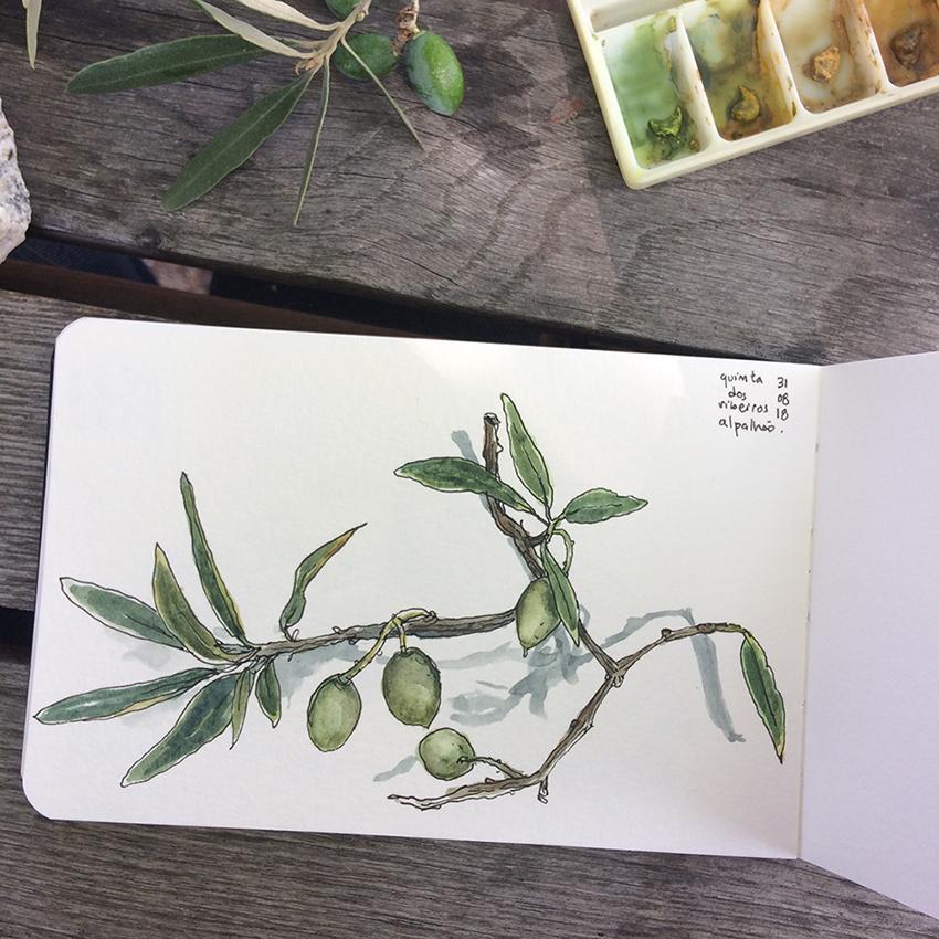 ana romao - watercolor sketch form sketchbook olives from quinta dos ribeiros - alentejo